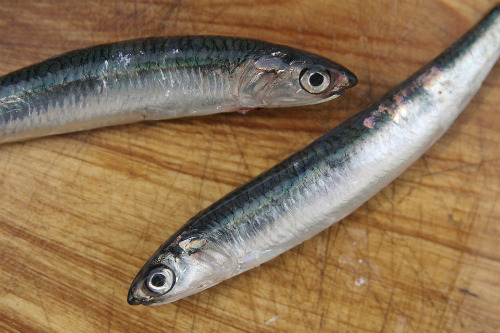 Benefits of fish nutrition during pregnancy outweigh for Fish with low mercury